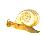 STOCK PNG snail3