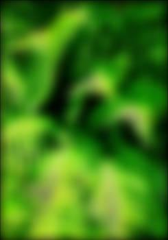STOCK PHOTO green
