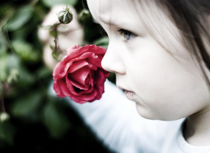 صور شخصيه للفيس Rose_by_jr_photo