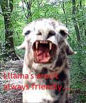 Unfriendly Llama