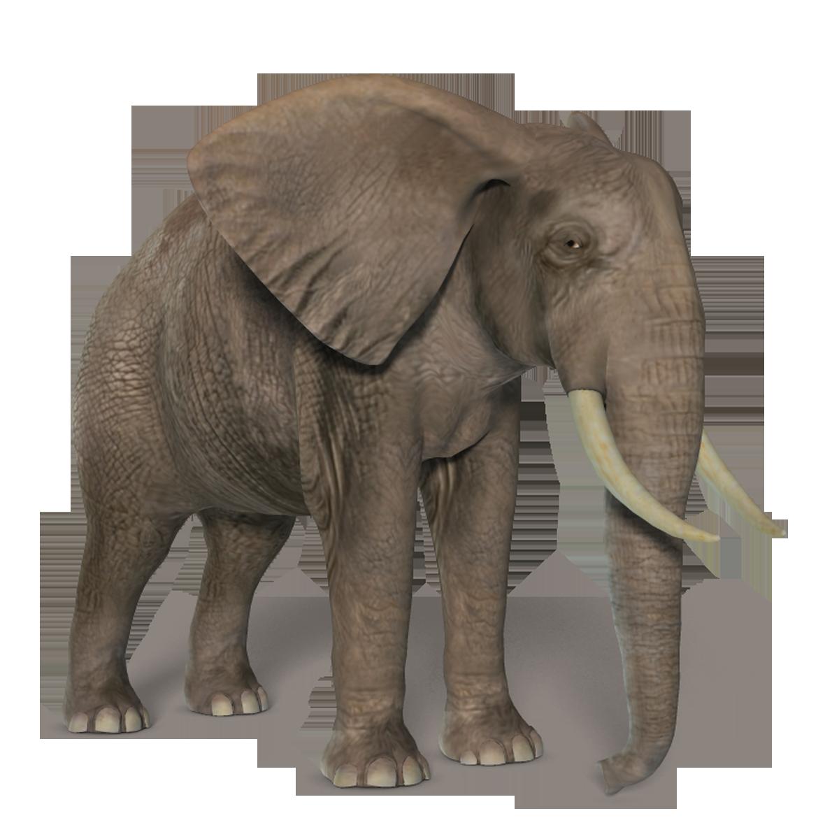 elefant tubes
