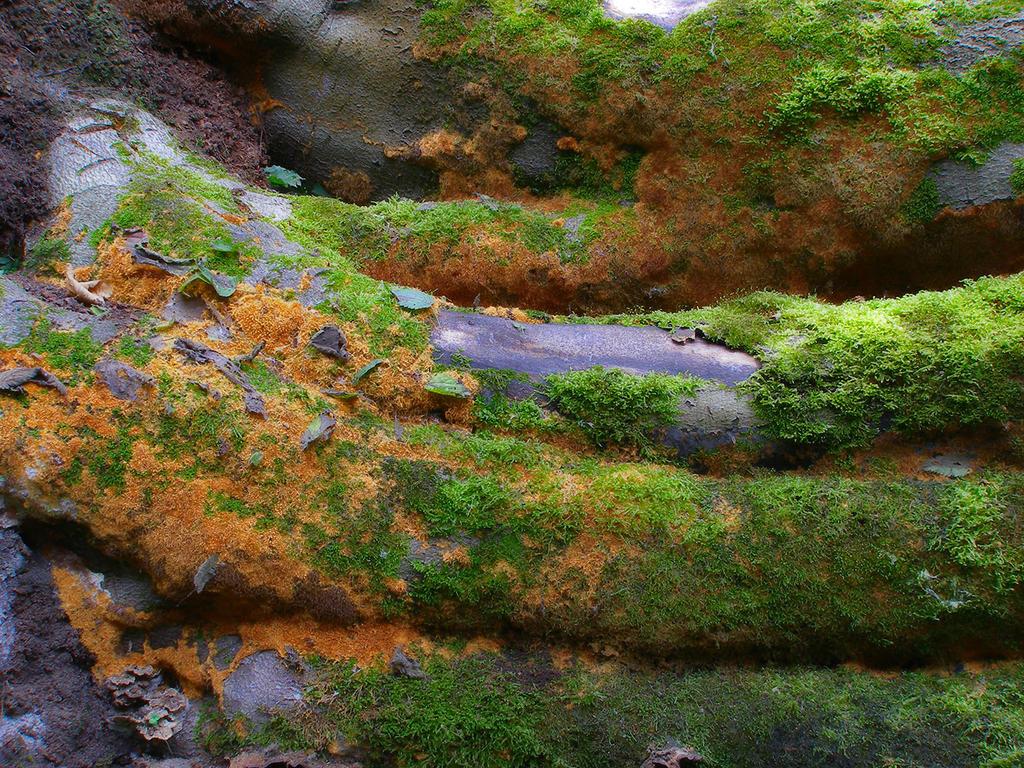 Fire rug mycelium by Oniroid