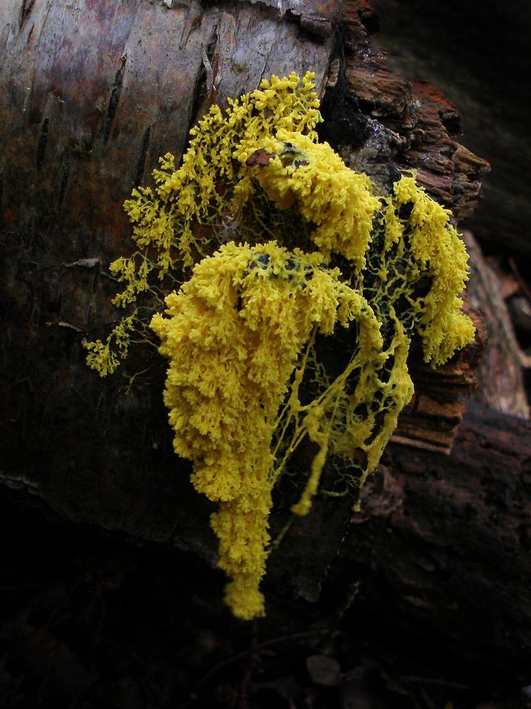 Yellow Dangley by Oniroid