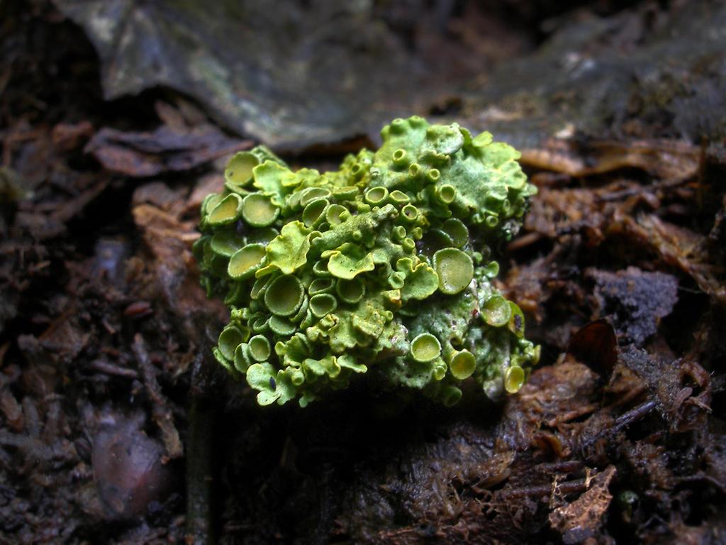 Lichen by Oniroid