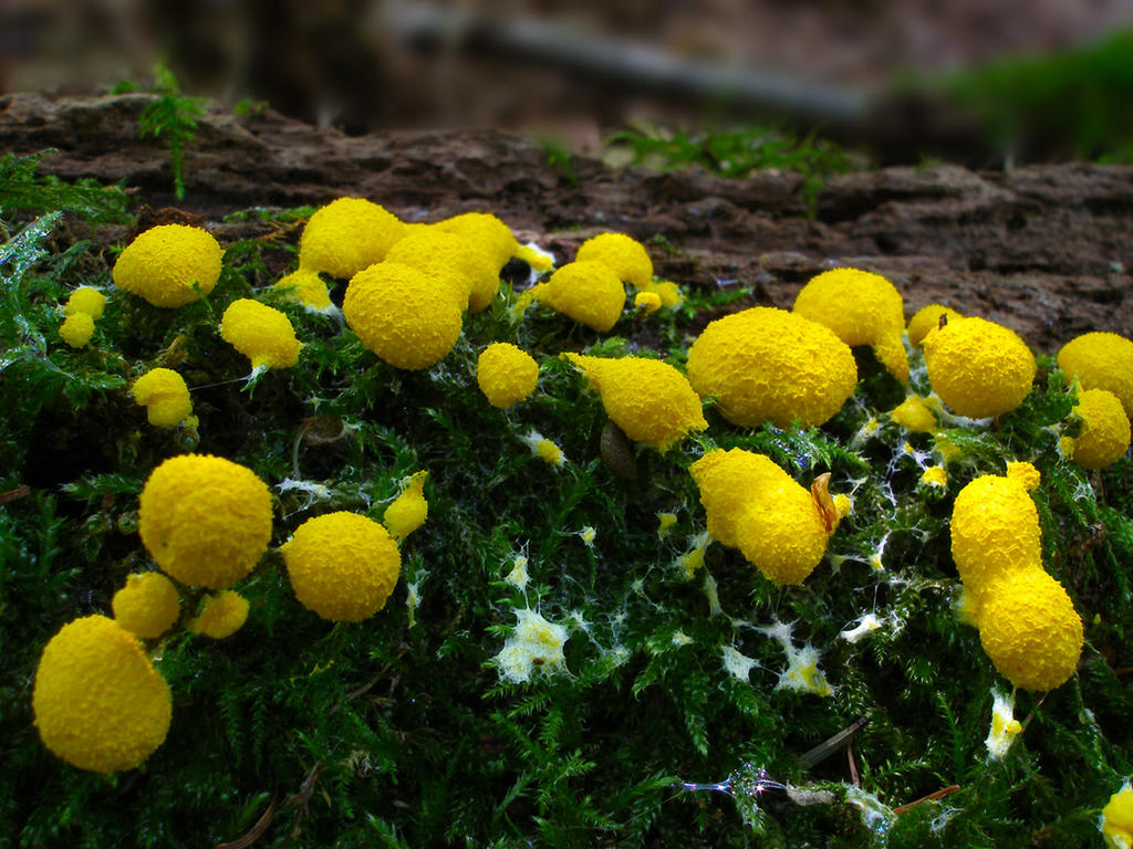 Splashes of yellow by Oniroid
