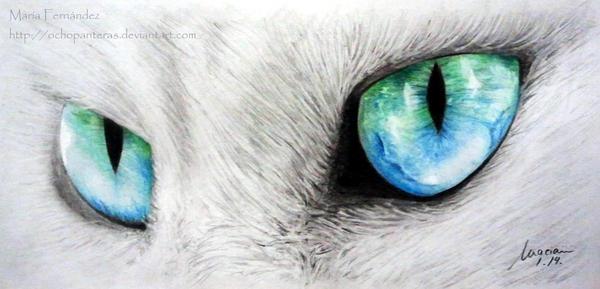 Cat by ochopanteras