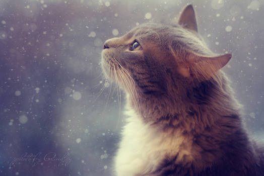 Watching the snow falling