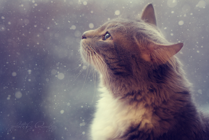 Watching the snow falling by Alhor-Ern
