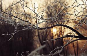Winter sun by Alhor-Ern