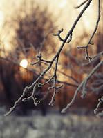 Winter sun. 2 by Alhor-Ern