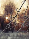 Winter sun. 2