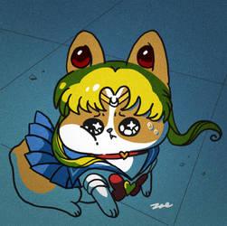 Sailorcorgi