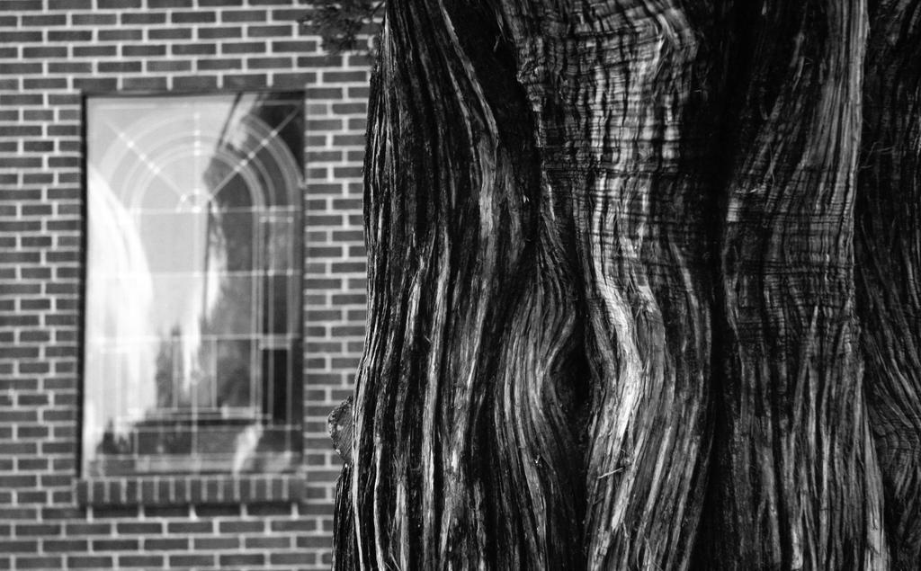 Ancient cedar, Baptist church - Alabama, USA by jwebbermedia