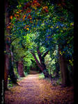 Colour Walkway by Emeire