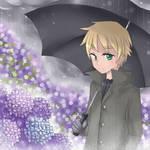 APH - Hydrangea and the rain