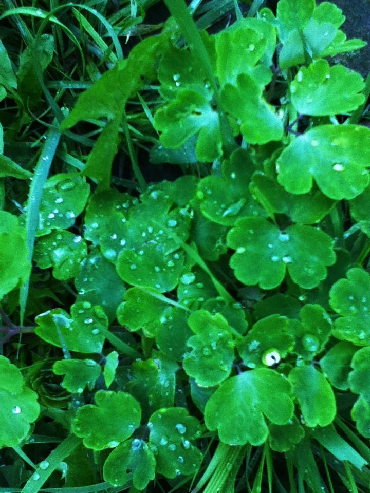 Raindrop #2 by 08benji