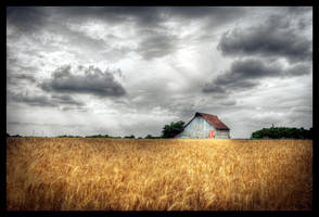 Barn in wheat field by aaronbee