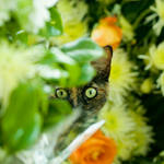 cemetery cat 1
