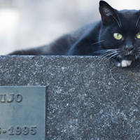 cemetery cat 4 by poivre
