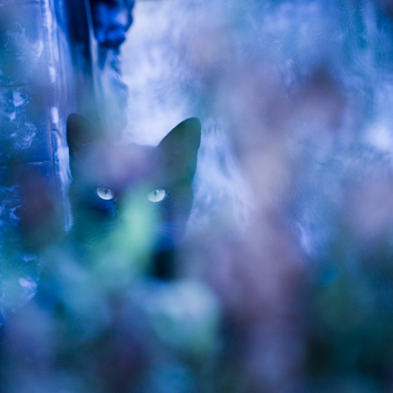 cemetery cat 5 by poivre