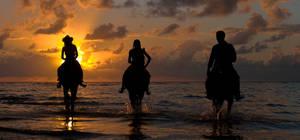 sun and horses