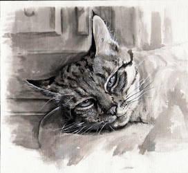 23 - Gato by mmmilitia