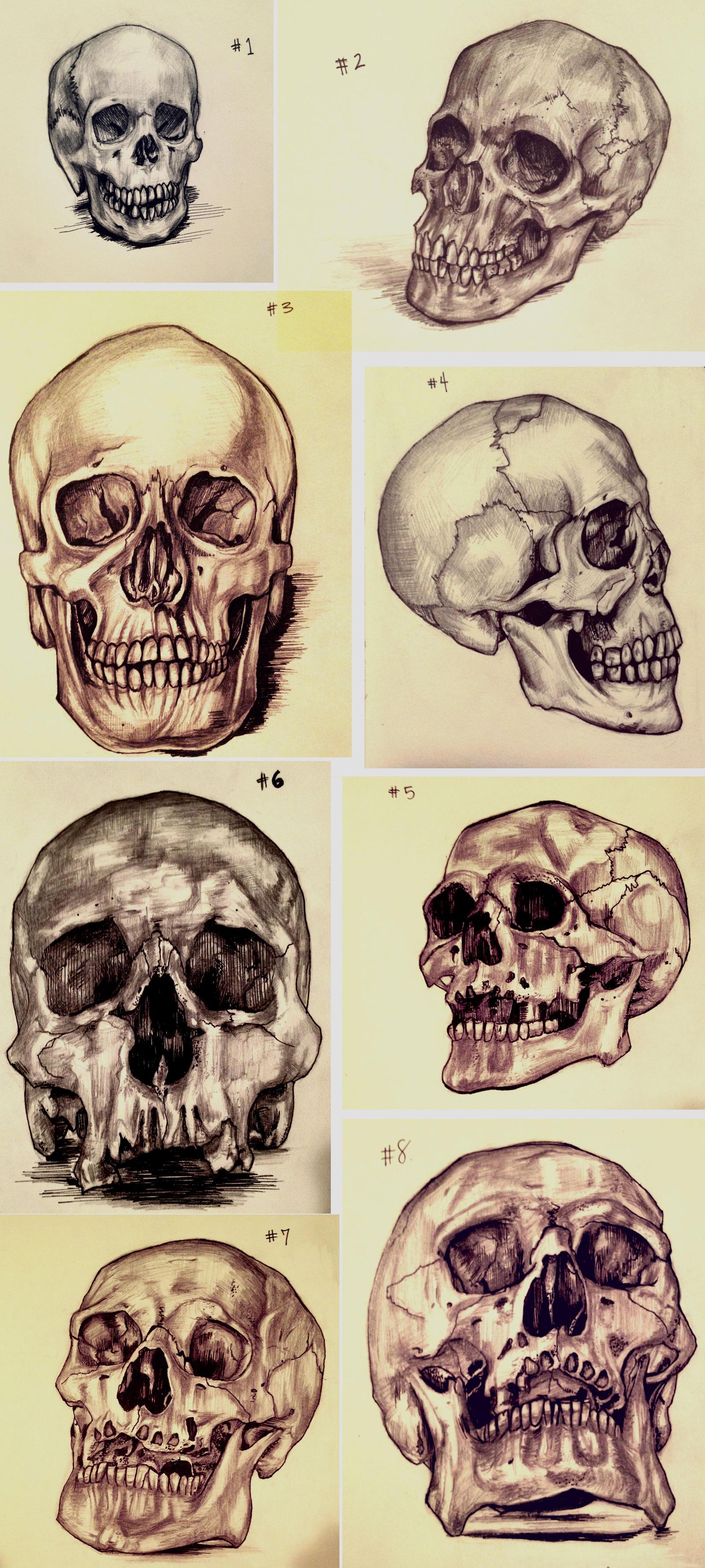 Skull Sketches by amirafox