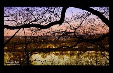 Winter Evening Light My Dear
