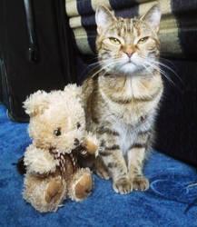 Puszedli and the teddy bear. by MiniFru