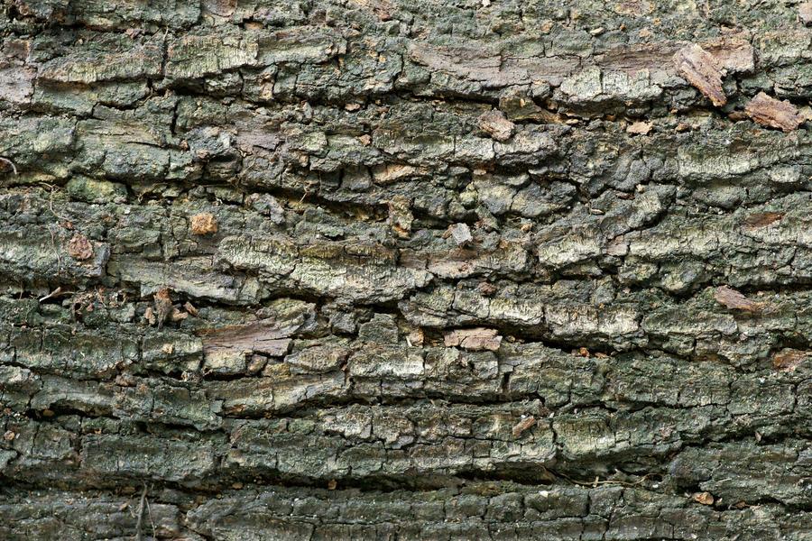 Kulit pohon by fitrido