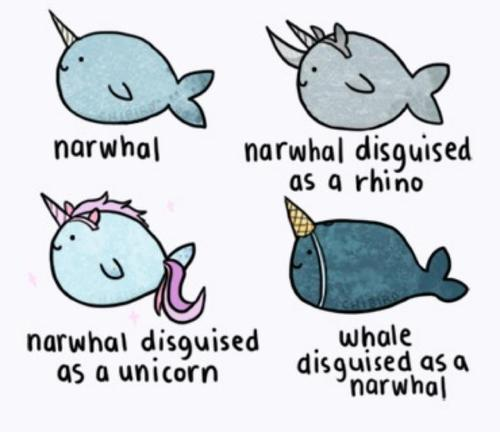 Awesome Narwhal Wallpaper