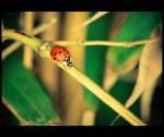 Ladybug by RemusSirion
