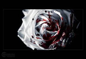 White rose V by RemusSirion