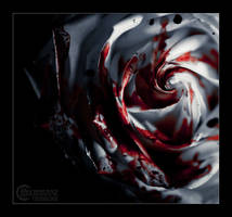 White rose III by RemusSirion