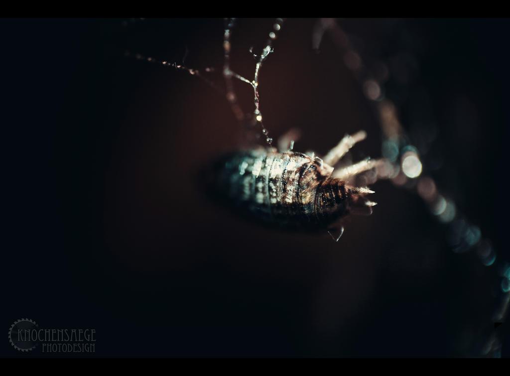 Invertebrate by RemusSirion