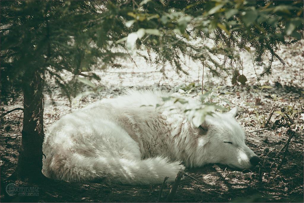 Sleepy by RemusSirion