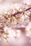 Let spring be.. by OceanLoner04
