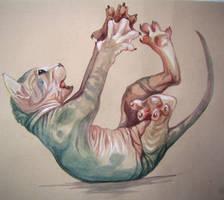 Sphynx Canadian_kitten by Mushrushu