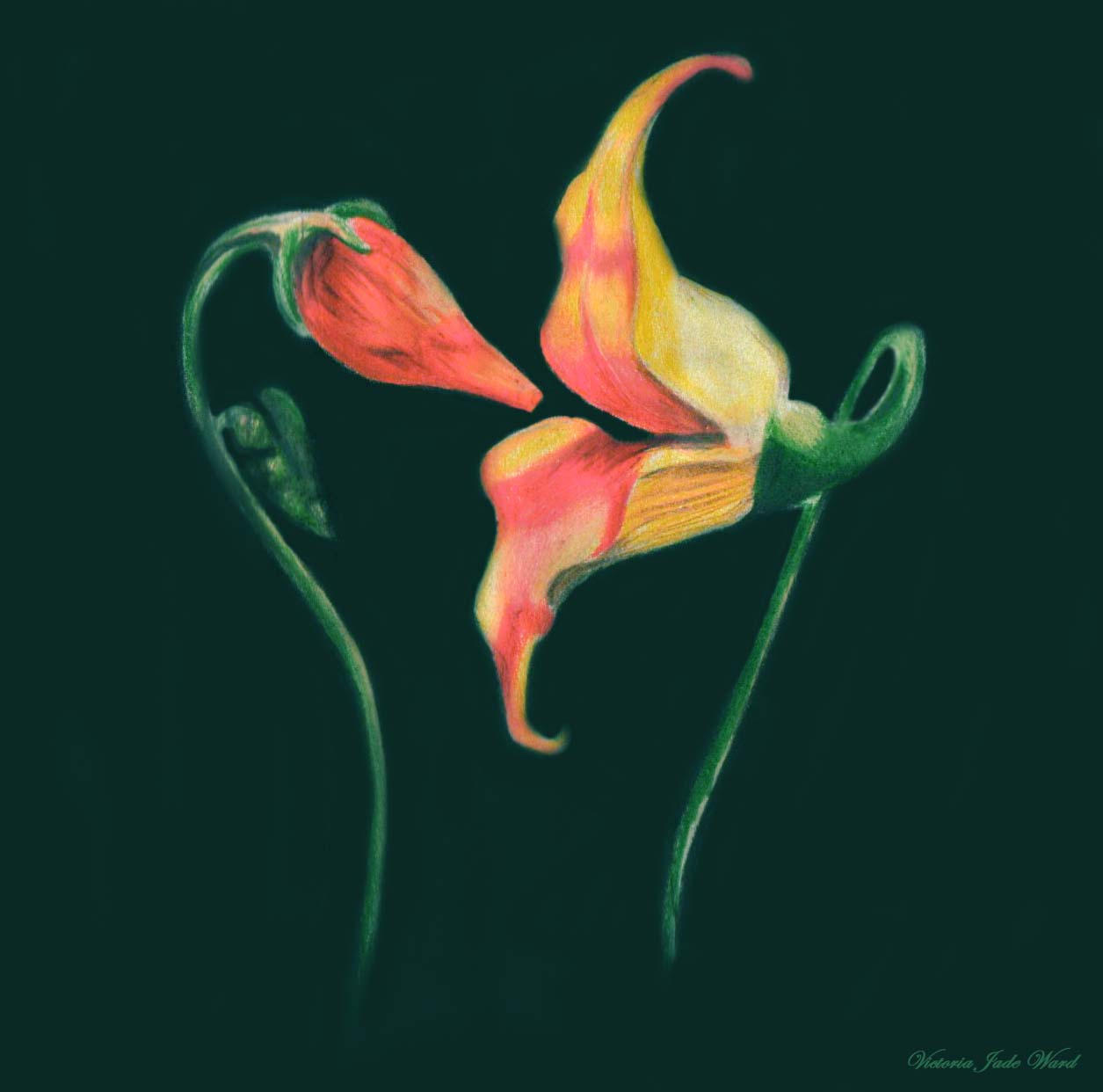 Pink Floyd The Wall Tattoo Flowers   www.imgkid.com - The ...