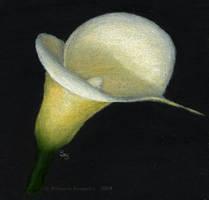 Lily by slshimerdla