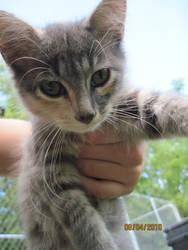 Kitten by supercilious-zahhy