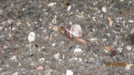 Snail by supercilious-zahhy