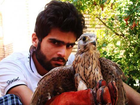My-Falcon