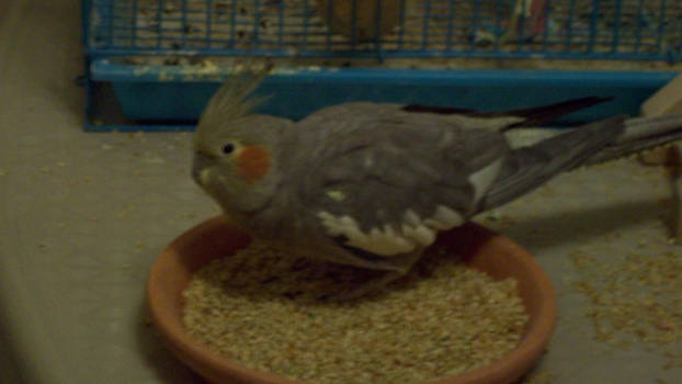 faraday's in the food dish