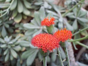 flowers115