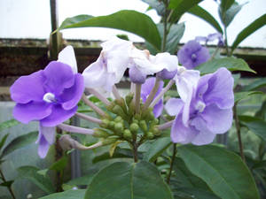 flowers117
