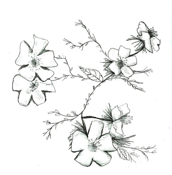 Line Art Flower Pattern : Image gallery line flower