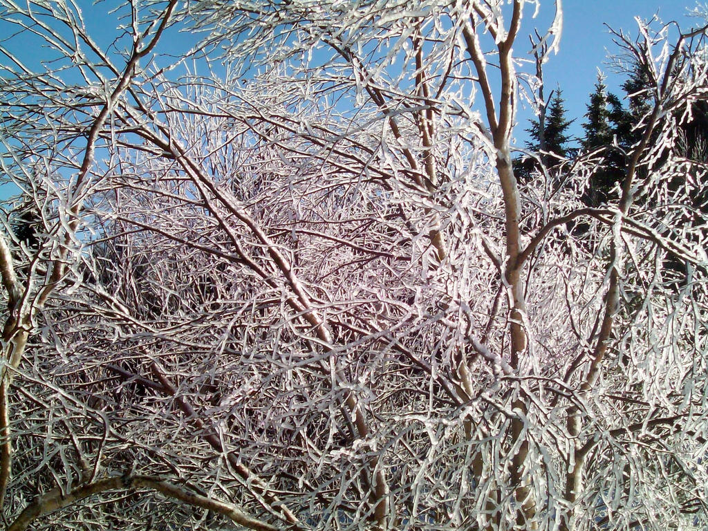 Ice Covered Trees 5 by DerpyDash64