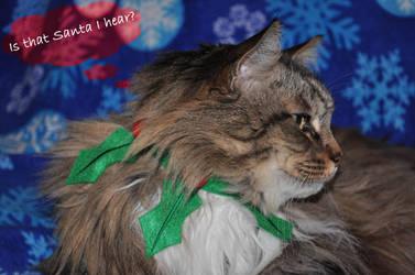 Happy Holidays from Elf Fluffy by Avarahaiel