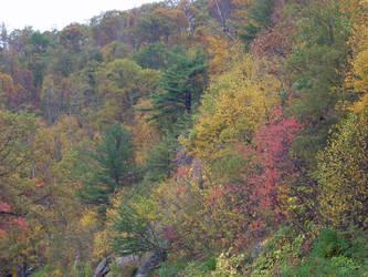 Autumn Foliage on Skyline Dr. by Avarahaiel